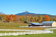 Mt Chocorua Posters - Remick Farm Autumn Poster by Larry Landolfi
