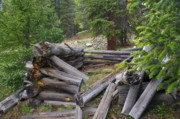 Log Cabins Prints - Remnants of Sherrod Loop Print by Cynthia  Cox Cottam