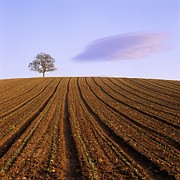 Field. Cloud Prints - Remote tree in a ploughed field Print by Bernard Jaubert