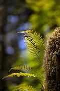 Renewal Ferns Print by Mike Reid