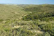 Cfr Prints - Renosterveld Conservation Area Print by Peter Chadwick