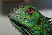 One Animal Posters - Reptil Poster by Martin Zalba is a photographer looking for a personal look,