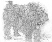 Mutt Drawings - Rescue Dog  by Jim Hubbard