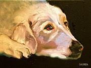 Retriever Drawings Posters - Rescued Golden Poster by Susan A Becker