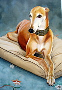 Greyhound Prints - Rescued Greyhound Print by Sandra Chase