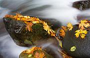Fall Leaves Photo Originals - Respite by Mike  Dawson