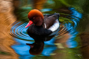 Christopher Holmes Metal Prints - Resting In Pool Of Colors Metal Print by Christopher Holmes