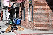Dogs Digital Art Originals - Resting On The Corner by Rob Hans