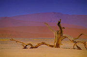 Dunes Prints - Resting Place of a Dead Tree Print by Douglas Barnard
