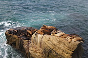 Acquatic Framed Prints - Resting Sealions Framed Print by Riccardo Vanorio