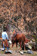 Rimrock Photos - Resting The Herd by Laurel Sherman