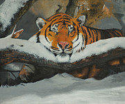 Thomas Luca - Resting Tiger