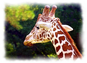 Reticulated Giraffe Print by Judi Bagwell