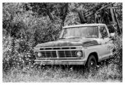 White Truck Framed Prints - Retirement Ford Truck in Field Framed Print by Randy Steele