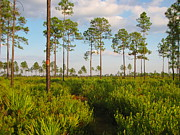 Barbara Bowen - Return Loop of the Florida Trail