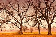 Winter Trees Metal Prints - Revelation Metal Print by Iris Greenwell