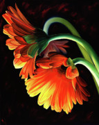 Orange Flowers Prints - Reverence Print by Stephen Kenneth Hackley