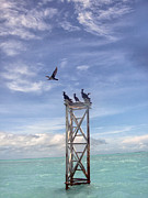 Revised Image Of Birds On Wooden Stand In The Ocean Off Key West Print by Christopher Purcell