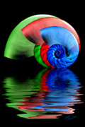 Rgb Framed Prints - RGB Shells Framed Print by Judi Quelland