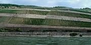 Rhine Valley Posters - Rhine Valley Vineyards Panorama Poster by Thomas Marchessault
