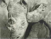 Jungle Drawings Originals - Rhino Love by Carla Kurt