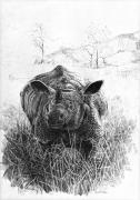 Serengeti Drawings Prints - Rhino Print by Paul Illian