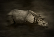 Rhinoceros Framed Prints - Rhino Framed Print by Ron Jones