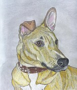 Pitt Drawings Posters - Rhodesian Ridgeback American Pitbull Cross  - Rexi Poster by Don  Gallacher