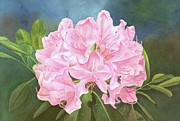Leona Jones Posters - Rhododendron Poster by Leona Jones
