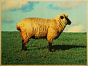 Animals Digital Art - Rhon Sheep Of Germany by Vintage Poster Designs
