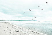 Flying Seagulls Framed Prints - Rhosneigr Beach Framed Print by Georgia Fowler