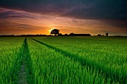 Rice Paddy Prints - Rice Field At Sunrise Print by Andreas Jones