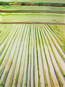 Rice Field Paintings - Rice Field by Becky Kim