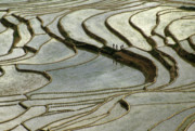 Mosaic Photos - Rice Terrace Mosaic by Michele Burgess