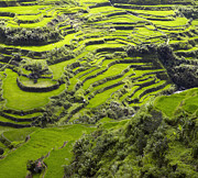 Landscaped Prints - Rice Terraces in Banaue Print by Skip Nall