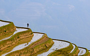 Chinese Peasant Framed Prints - Rice Terraces Of Yuanyang  Yunnan China Framed Print by Konstantin Kalishko