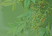 Colored Pencil Metal Prints - Rich green Monotone Leaves abd Berries Metal Print by Linda Phelps