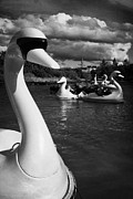 Boating Lake Prints - Ride On Swans In The Pickie Fun Park In Bangor County Down Northern Ireland Print by Joe Fox