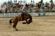 Jerry West Prints - Ridem Cowboy Print by Jerry McElroy