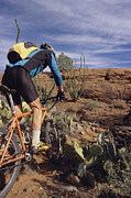 Athletes Posters - Rider Cycling Through Cacti, Arizona Poster by David Edwards