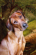 Pooch Framed Prints - Ridgeback Woodland Framed Print by Julie L Hoddinott