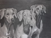 Dog Lover Drawings Framed Prints - Ridgebacks Framed Print by Ruthie Sutter