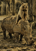 Rhinoceros Photo Posters - Riding Along  Poster by Lourry Legarde