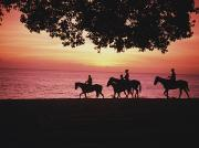 Beach Sunsets Prints - Riding Horses On The Beach At Sunset Print by Axiom Photographic