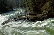 Riding The River Print by Karol  Livote