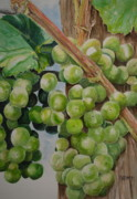 Riesling Paintings - Riesling Grapes by Sue Ann Glenn