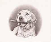 Labrador Retriever Drawings - Riley by Jamie Warkentin