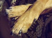 Cross Breed Photos - Rileys Paws by Deborah  Montana