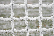 Symmetric Prints - Rime covered fence Print by Christine Till