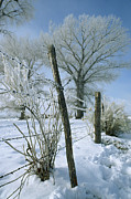 Barbed Wire Fences Photo Prints - Rime From Rare Fog Coats Fence Print by Gordon Wiltsie